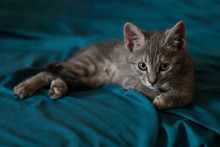 Beautiful Gray Little Cat On T...
