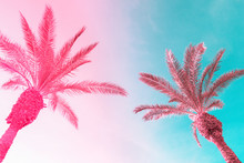 Two Tall Palm Trees On Toned Gradient Pink Blue Sky With Light Fluffy Clouds. Creative Trendy Summer Tropical Background. Vacation Travel Concept. Copy Space