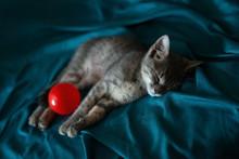 Beautiful Gray Little Cat Slee...