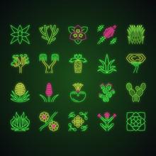 Desert Plants Neon Light Icons Set