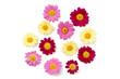 Leinwanddruck Bild Margeritenblüten