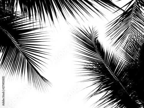 Foto auf AluDibond Palms beautiful palms leaf on white background
