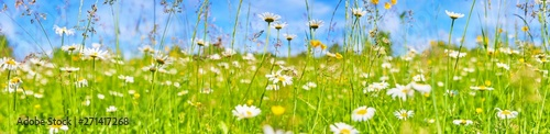 Foto op Canvas Madeliefjes Beautiful flower meadow with daisies.