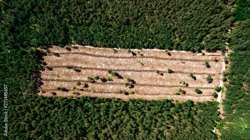 illegal cutting of forest, empty forest glade aerial photography with drone Canvas Print