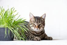 Tabby Cat Lies Near The Fresh ...