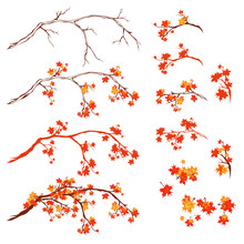 Autumn Season Maple Tree Branches - Bright Fall Season Vector Design Set