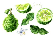 Fresh Bergamot Fruit With Leaf Set. Graphic Design Elements. Watercolor Hand Drawn Illustration, Isolated On White Background
