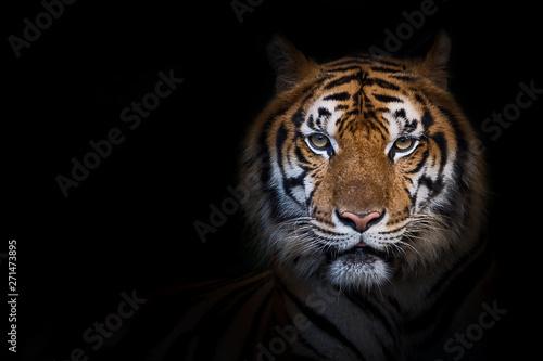 Foto op Aluminium Tijger Portrait of tiger.