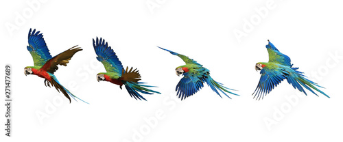 Four flying patterns of macaw parrots. Canvas Print