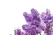It's spring. Flowering branch of lilac on a white background. Fragrant fragrance of flowers. Bakground