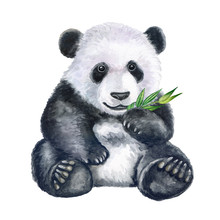 Cute Panda With Bamboo Isolate...