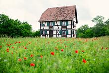 Alsatian House With Poppy Flower Field