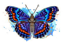 Tropical Butterfly. Color, Hand-drawn, Graphic Image Of A Butterfly On A White Background In Watercolor Style.