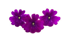 Lilac Verbena Isolated