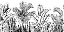 Seamless Horizontal Line With Tropical Palm Trees, Banana Leaves And Snake Plants. Black And White. Hand Drawn Vector Illustration.