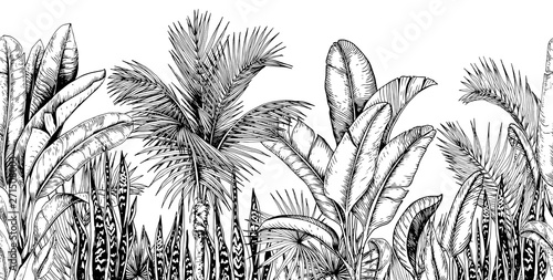 obraz lub plakat Seamless horizontal line with tropical palm trees, banana leaves and snake plants. Black and white. Hand drawn vector illustration.