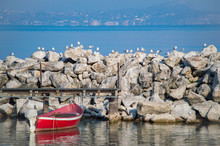 Seagulls Gathering. They All S...