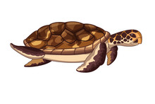 Brown Sea Turtle Icon Cartoon