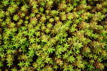 Top View Of Resistant Plant Wi...