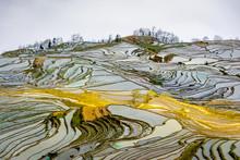Rice Terraces, Foggy Misty Landscape, China