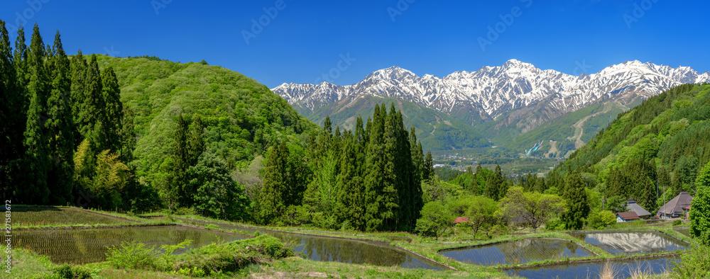 Fototapety, obrazy: パノラマ 水田と北アルプス白馬三山の景色
