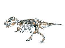 Dinosaur Skeleton Vector Sketc...