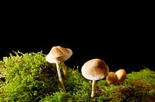 Mushrooms On Green Moss On A Dark Background.