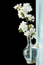 Abstract Blooming Apple Tree I...