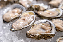 Fresh Oysters On Ice At A Seafood Restaurant. Ready For Eat Or Serving, Selective Focus. Oysters Are Protein Rich And Raw With Lemon A Delicacy .