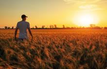 Male Farmer Standing In A Whea...