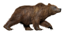 3D Walking Bear Isolated On Wh...