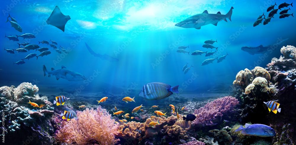Fototapeta Underwater view of the coral reef. Life in the ocean. School of fish.