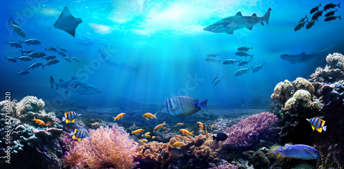 Photo sur Toile Recifs coralliens Underwater view of the coral reef. Life in the ocean. School of fish.