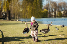 Toddler Girl Playing With Geese At A Pond In Park
