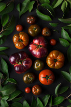 Overhead View Of Tomatoes With...