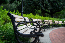 Line Of Park Benches