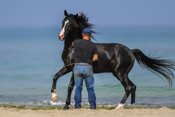 Man is training his horse on the sea beach