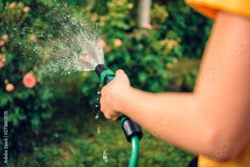Obraz Watering garden with hose sprinkler - fototapety do salonu
