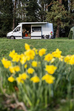 Close Up Of Yellow Daffodils In Spring, Camper Van Parked In The Distance.