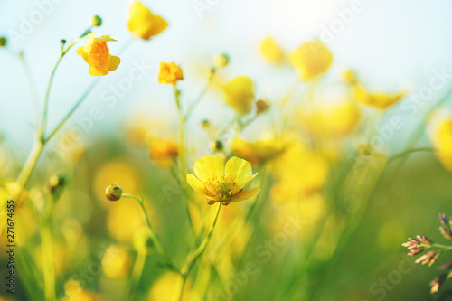 Foto auf Gartenposter Gelb summer field of yellow wildflowers