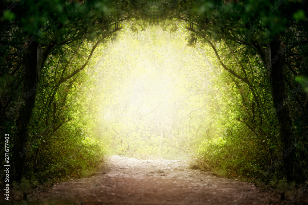 Fototapeta Fantasy green road to magic bright fairy tale forest.