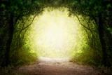 Fototapeta Las - Fantasy green road to magic bright fairy tale forest.