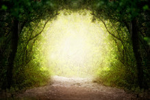 Fantasy Green Road To Magic Bright Fairy Tale Forest.