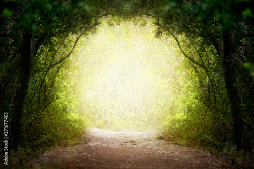 Photo Fantasy green road to magic bright fairy tale forest.