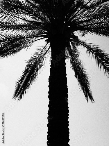 silhouetted palm tree in black and white
