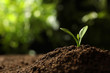 Young seedling in soil on blurred background, space for text