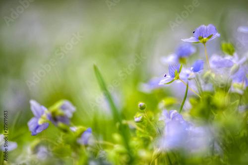 Türaufkleber Flieder Blue flowers on green background