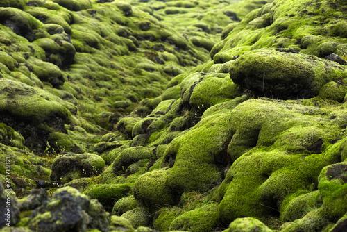 Obraz premium Pole lawy Eldhraun na Islandii
