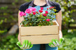 Leinwandbild Motiv Photo of unrecognizable woman in gloves with box with roses standing in garden