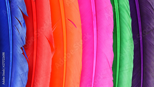 Close up of soft colorful feather for background Wallpaper Mural